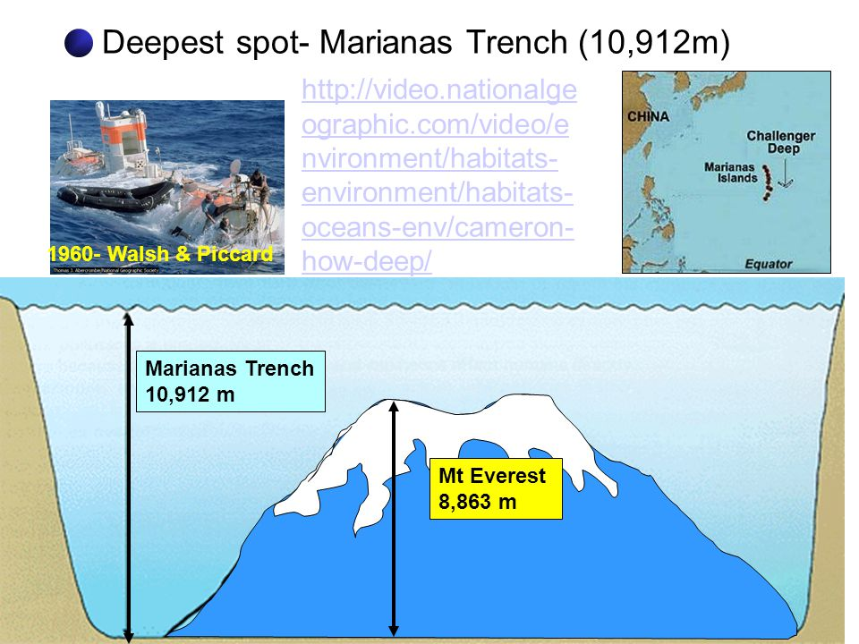 Deepest spot- Marianas Trench (10,912m)