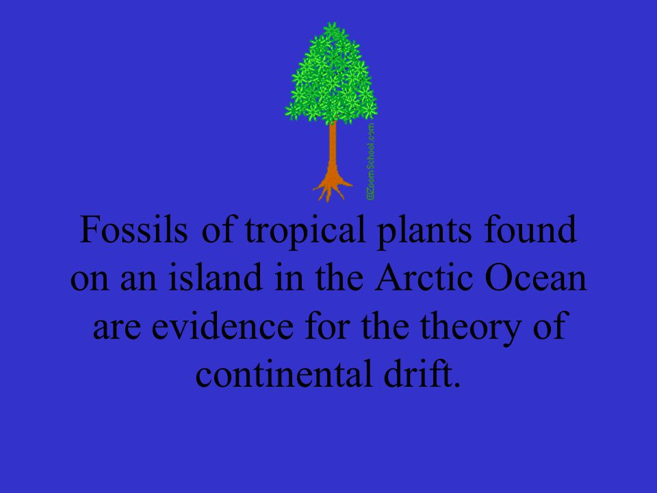 Fossils of tropical plants found on an island in the Arctic Ocean are evidence for the theory of continental drift.