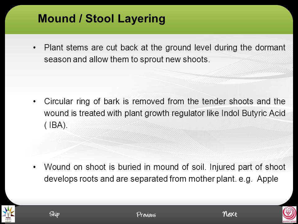 Mound / Stool Layering Plant stems are cut back at the ground level during the dormant season and allow them to sprout new shoots.
