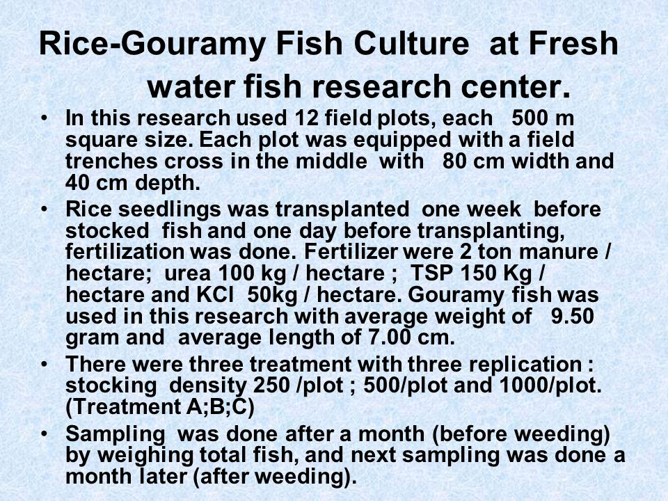 Rice-Gouramy Fish Culture at Fresh water fish research center.