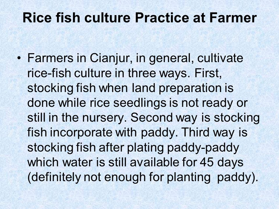 Rice fish culture Practice at Farmer