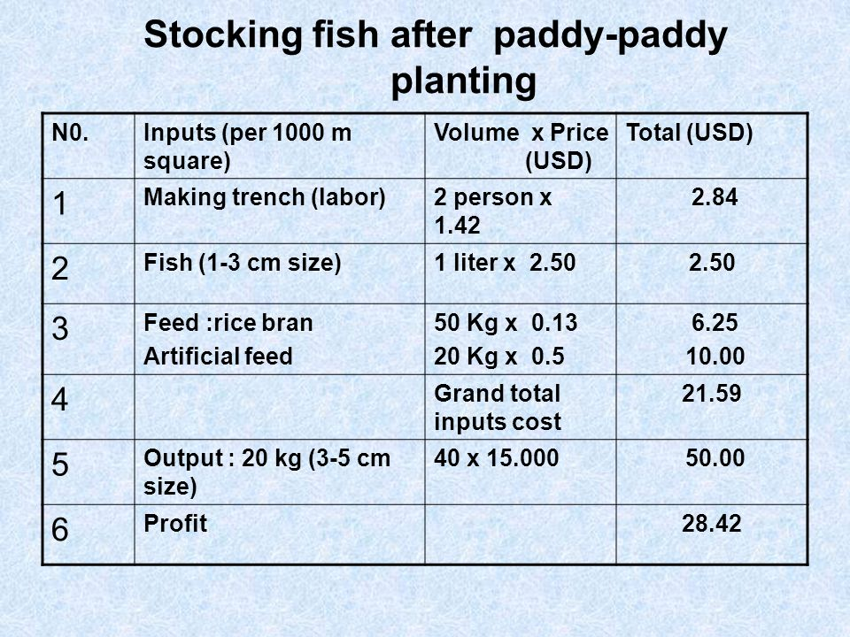 Stocking fish after paddy-paddy planting