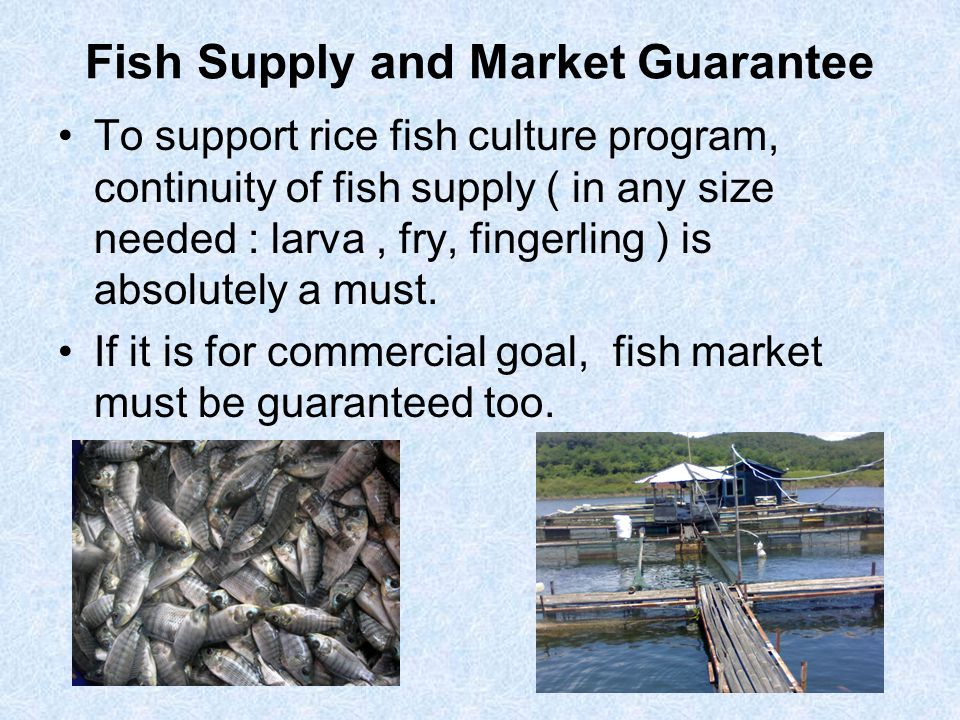 Fish Supply and Market Guarantee