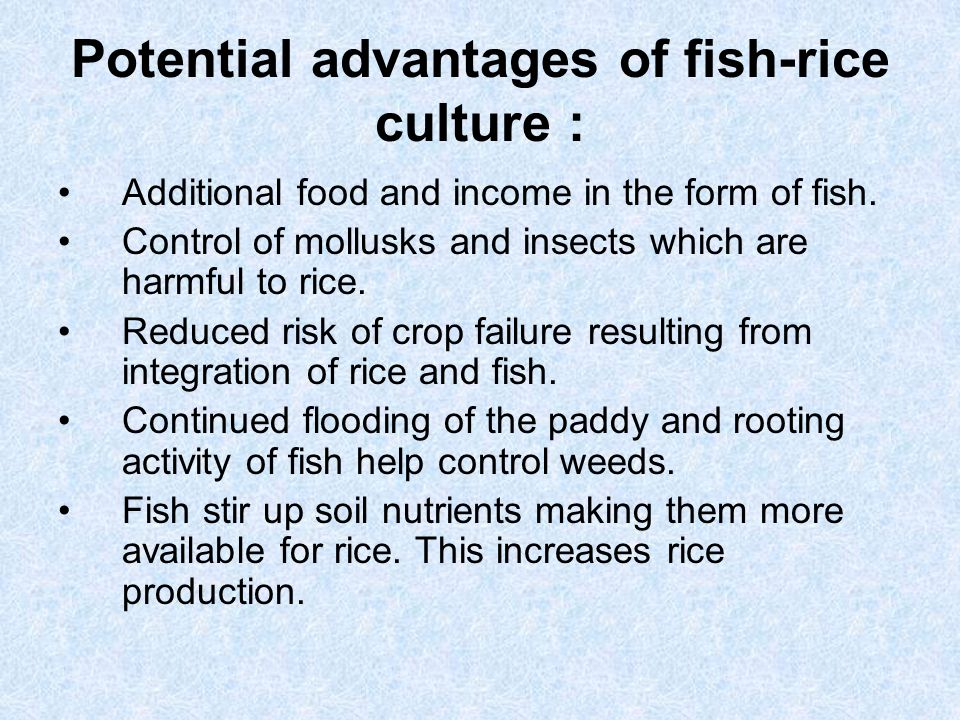 Potential advantages of fish-rice culture :