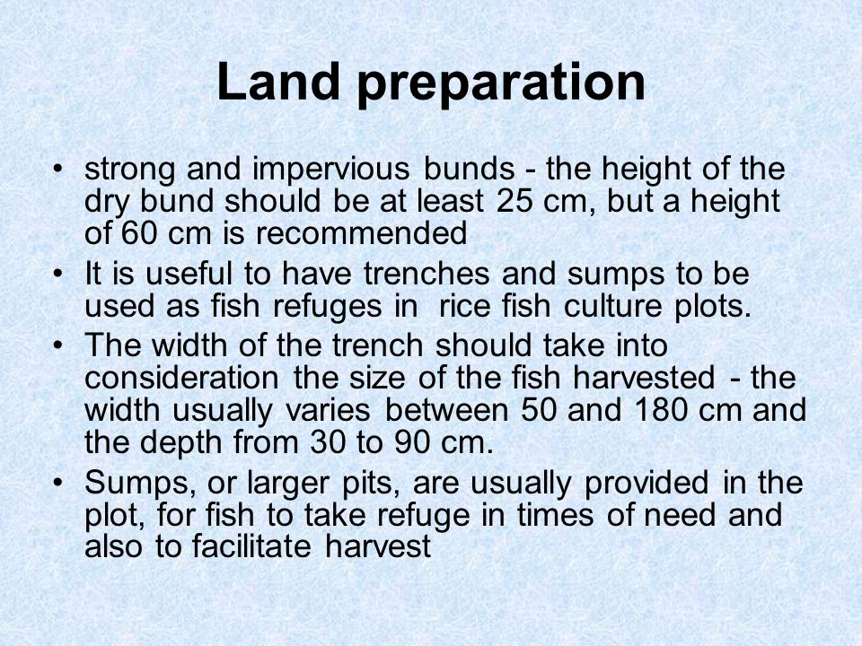 Land preparation strong and impervious bunds - the height of the dry bund should be at least 25 cm, but a height of 60 cm is recommended.