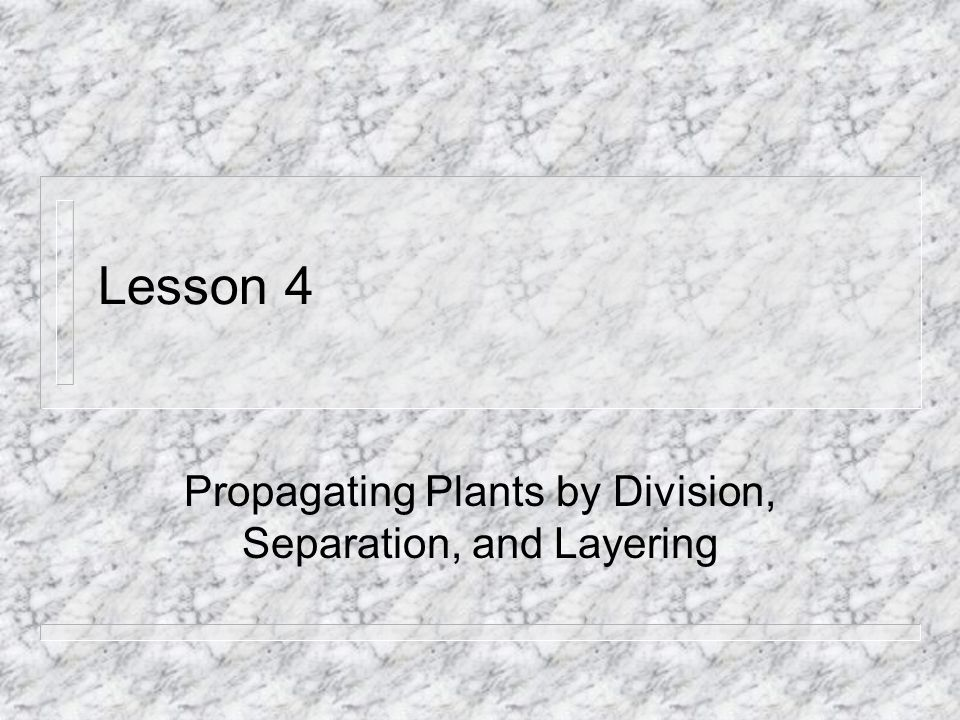 Propagating Plants by Division, Separation, and Layering