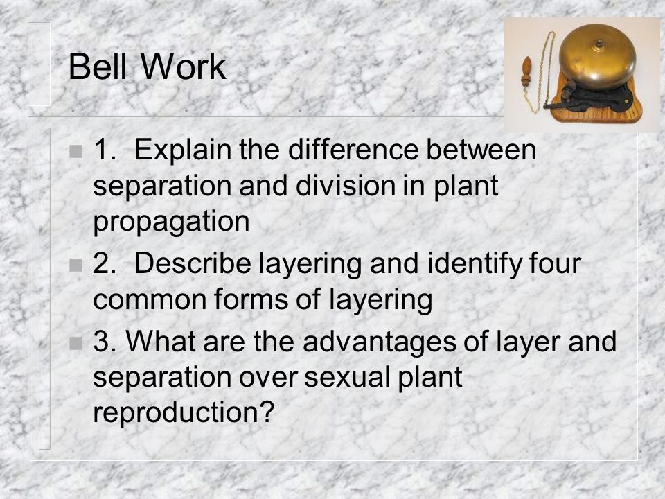 Bell Work 1. Explain the difference between separation and division in plant propagation.