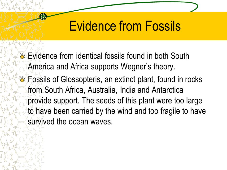 Evidence from Fossils Evidence from identical fossils found in both South America and Africa supports Wegner's theory.