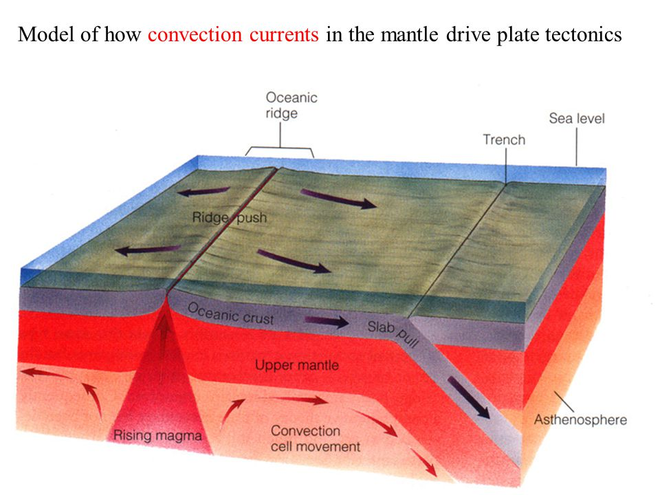 Model of how convection currents in the mantle drive plate tectonics