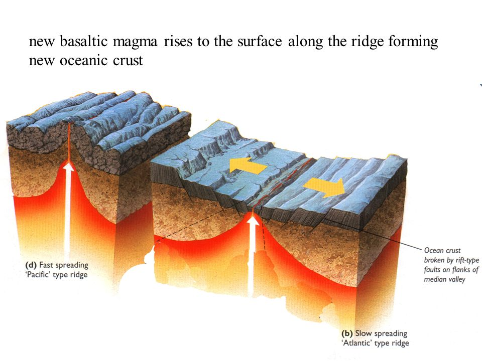 new basaltic magma rises to the surface along the ridge forming new oceanic crust