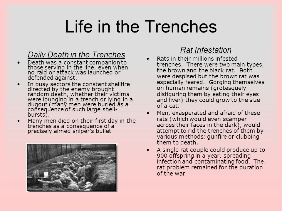 Daily Death in the Trenches