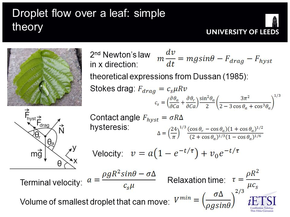 Droplet flow over a leaf: simple theory