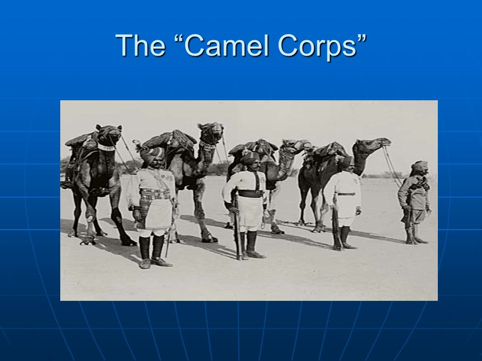 The Camel Corps