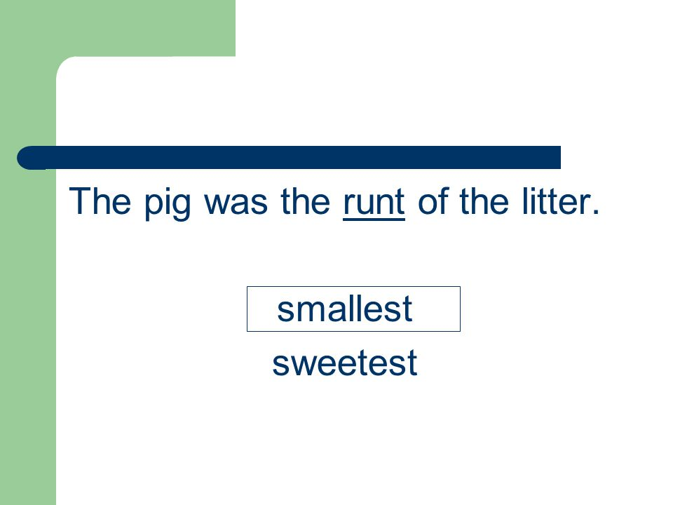 The pig was the runt of the litter.