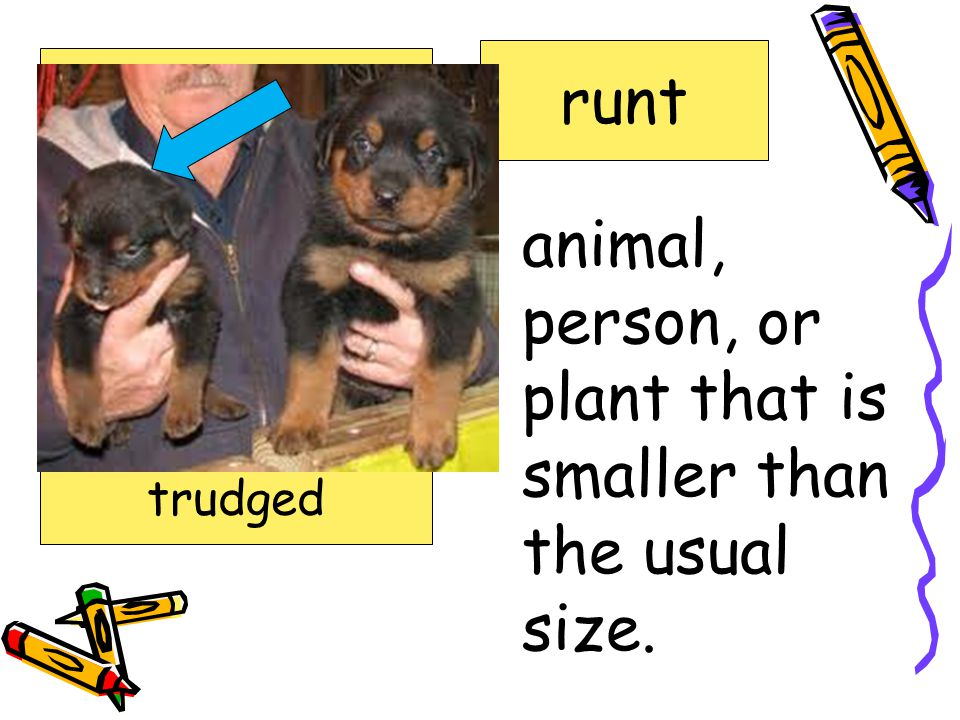 animal, person, or plant that is smaller than the usual size.