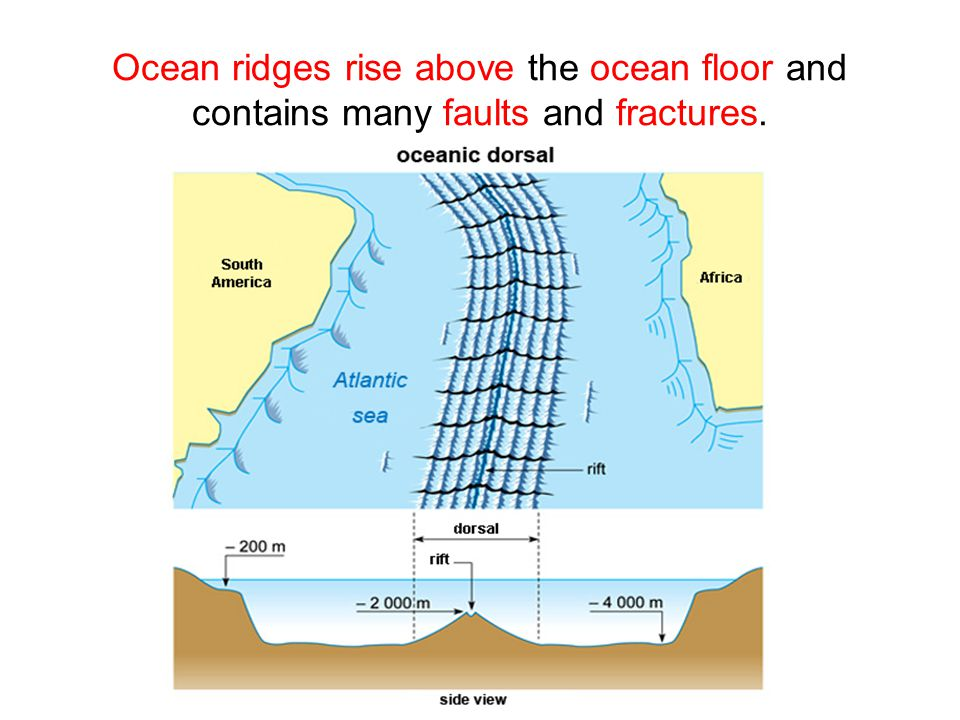 Ocean ridges rise above the ocean floor and contains many faults and fractures.