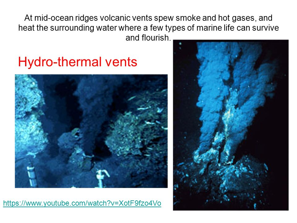 At mid-ocean ridges volcanic vents spew smoke and hot gases, and heat the surrounding water where a few types of marine life can survive and flourish.
