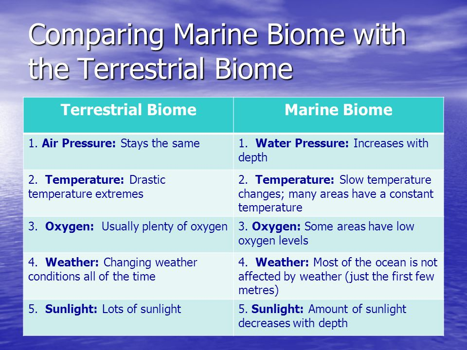 Comparing Marine Biome with the Terrestrial Biome