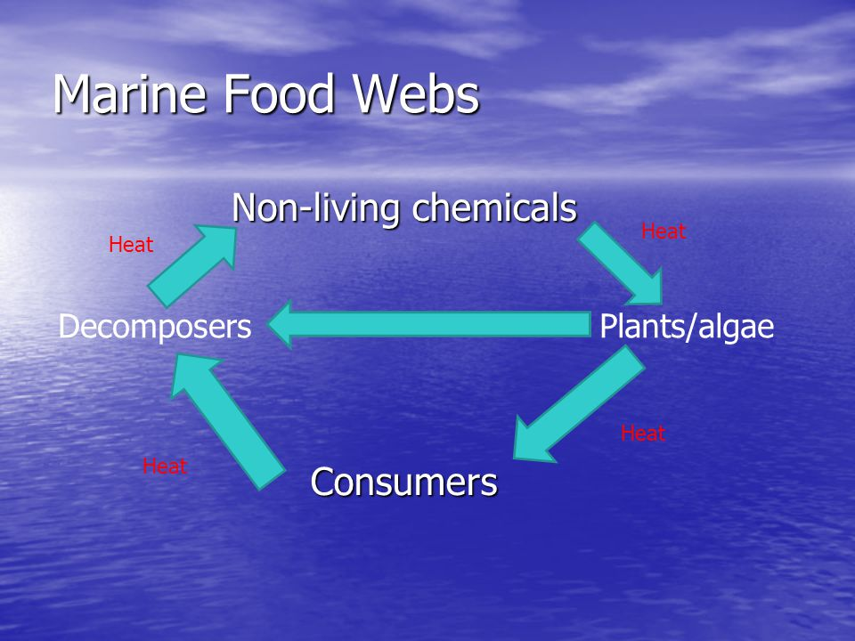 Non-living chemicals Consumers