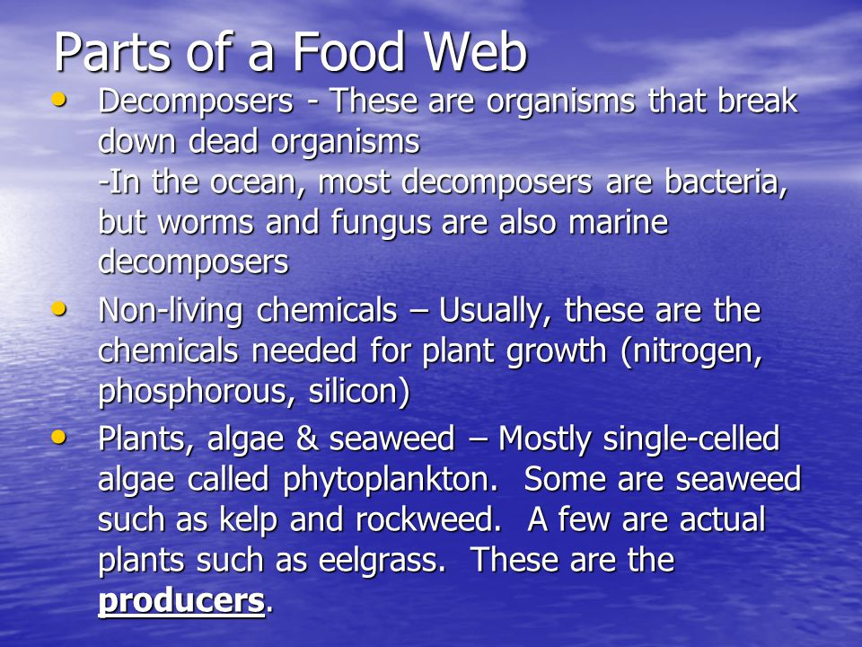 Parts of a Food Web