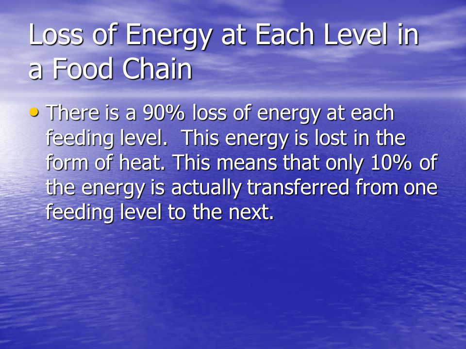 Loss of Energy at Each Level in a Food Chain