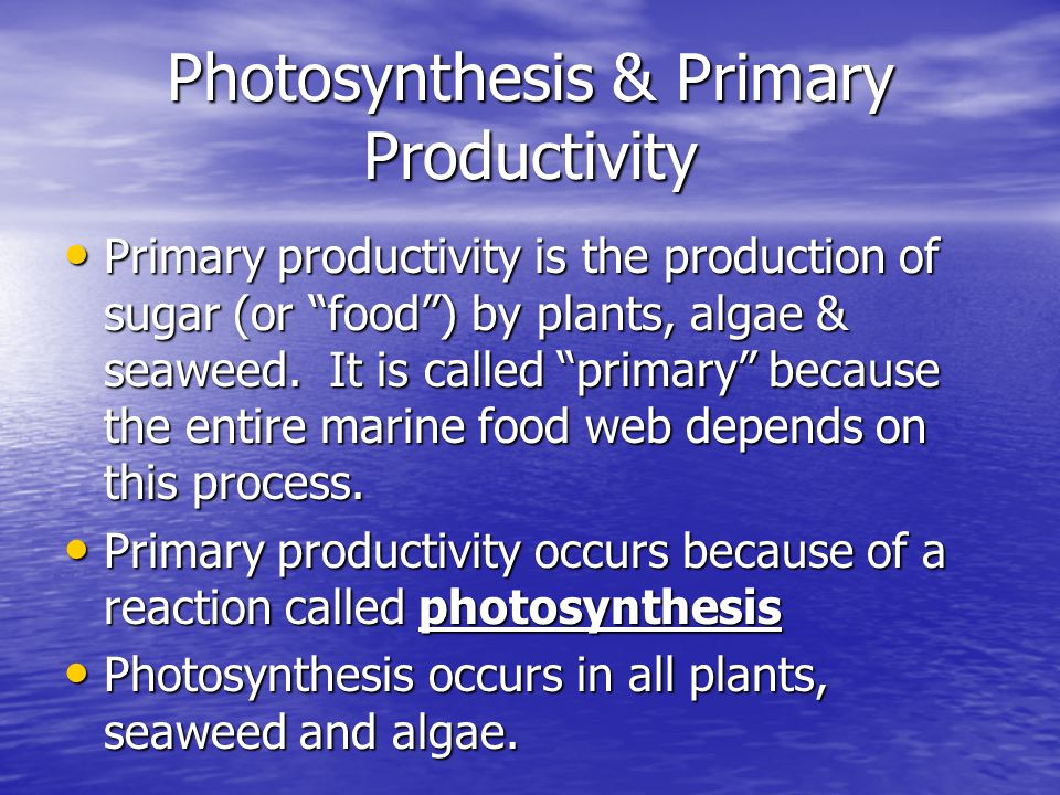 Photosynthesis & Primary Productivity
