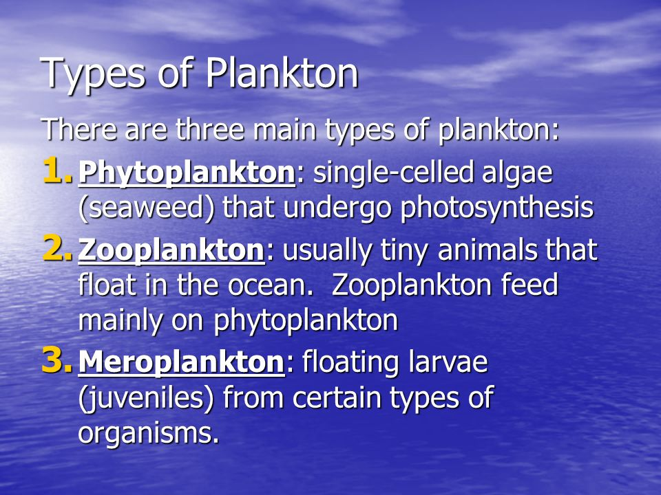 Types of Plankton There are three main types of plankton: