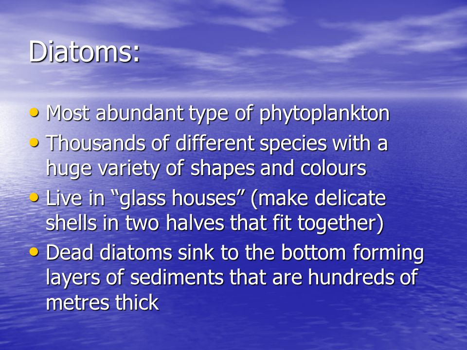 Diatoms: Most abundant type of phytoplankton