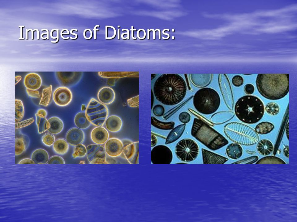 Images of Diatoms: