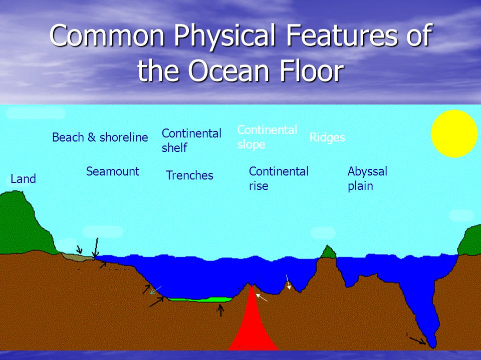 Common Physical Features of the Ocean Floor