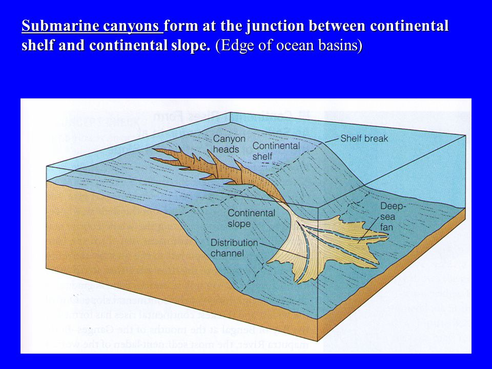 Submarine canyons form at the junction between continental shelf and continental slope.