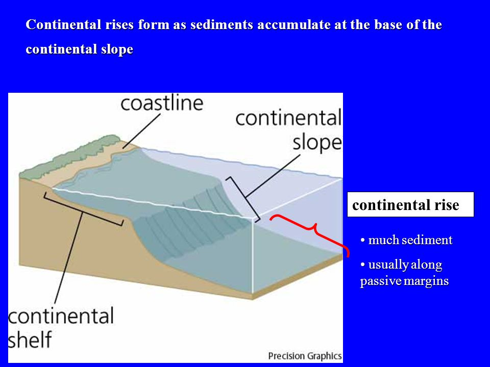 Continental rises form as sediments accumulate at the base of the continental slope