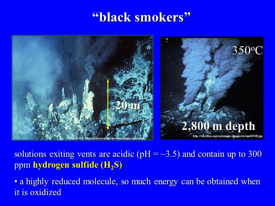 black smokers 350oC 20 m 2,800 m depth