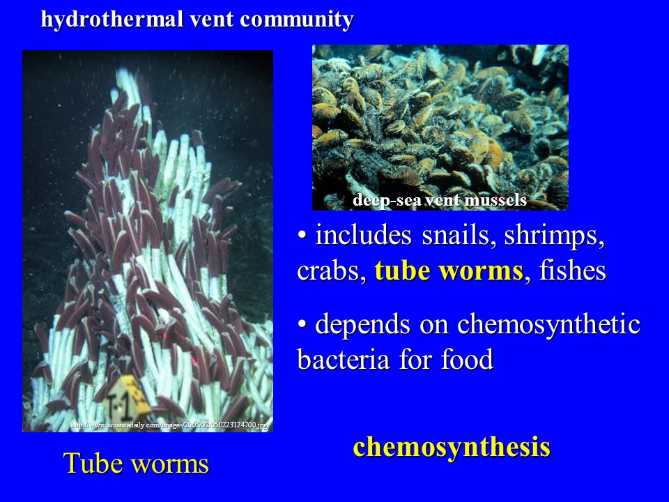 includes snails, shrimps, crabs, tube worms, fishes