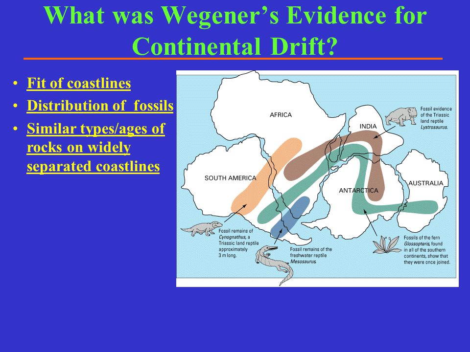 What was Wegener's Evidence for Continental Drift