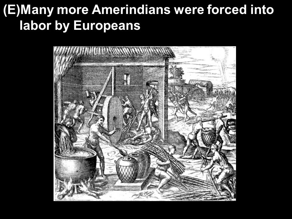 (E)Many more Amerindians were forced into labor by Europeans