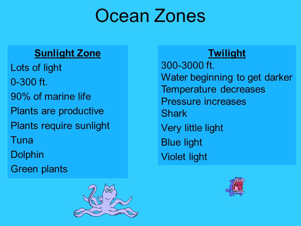Ocean Zones Sunlight Zone Lots of light 0-300 ft. 90% of marine life Plants are productive Plants require sunlight Tuna Dolphin Green plants
