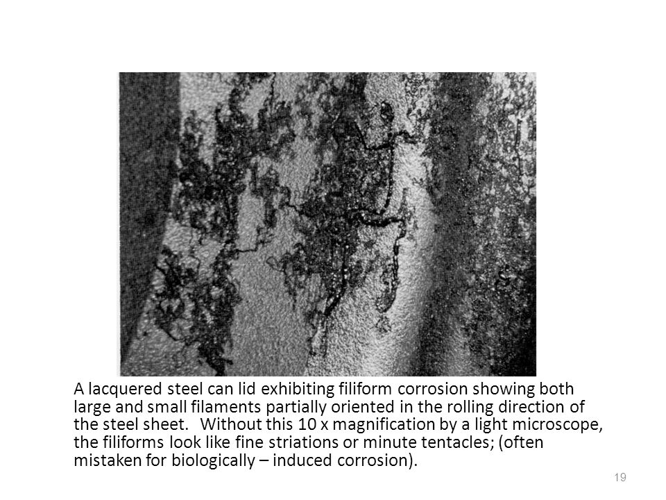A lacquered steel can lid exhibiting filiform corrosion showing both large and small filaments partially oriented in the rolling direction of the steel sheet.