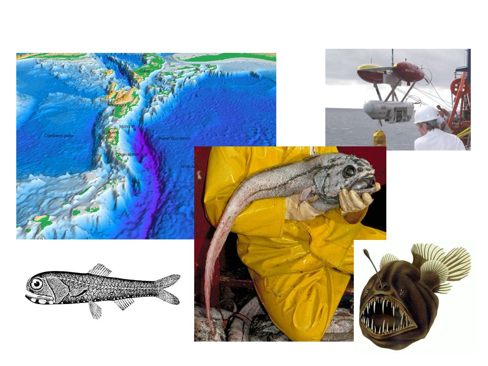 Manned or unmanned submersible vehicles (top right photo) have explored small parts of trenches discovering new species (like the fish photographed here) and amazing ecosystems.