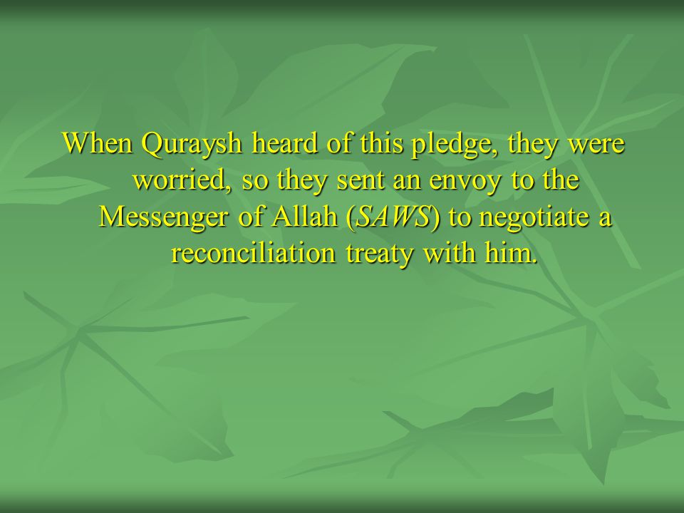 When Quraysh heard of this pledge, they were worried, so they sent an envoy to the Messenger of Allah (SAWS) to negotiate a reconciliation treaty with him.