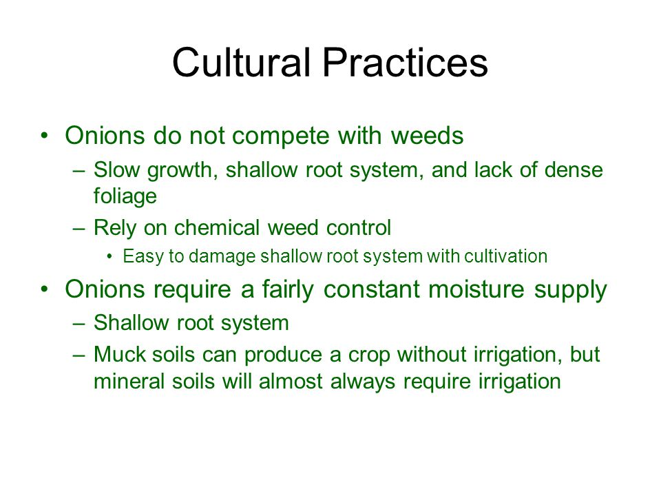 Cultural Practices Onions do not compete with weeds