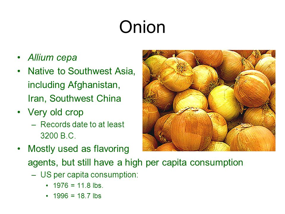 Onion Allium cepa Native to Southwest Asia, including Afghanistan,