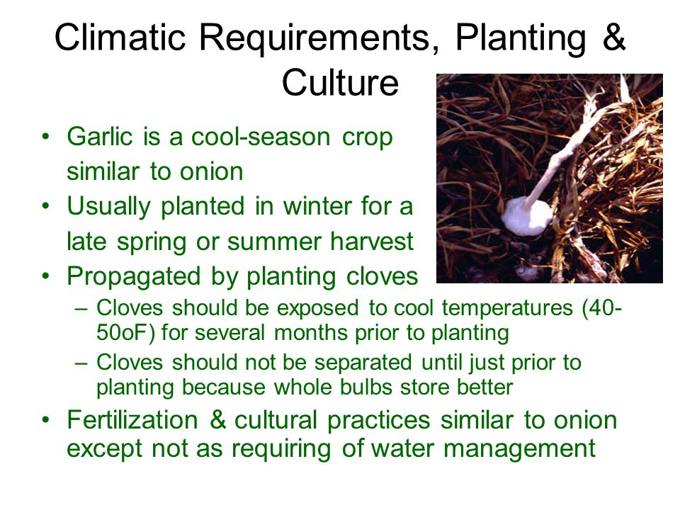 Climatic Requirements, Planting & Culture