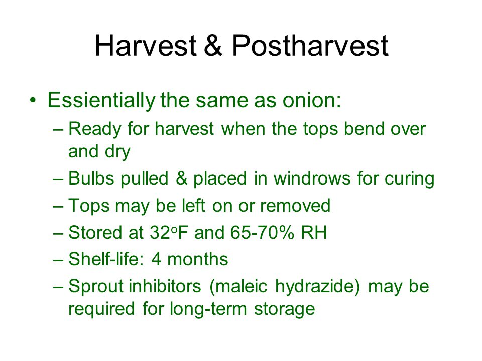 Harvest & Postharvest Essientially the same as onion: