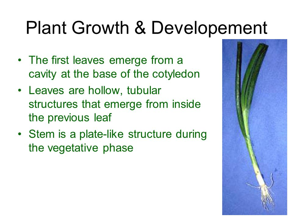 Plant Growth & Developement