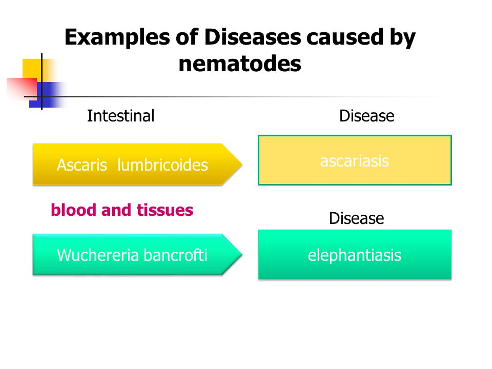 Examples of Diseases caused by nematodes