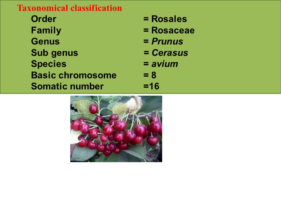 Taxonomical classification