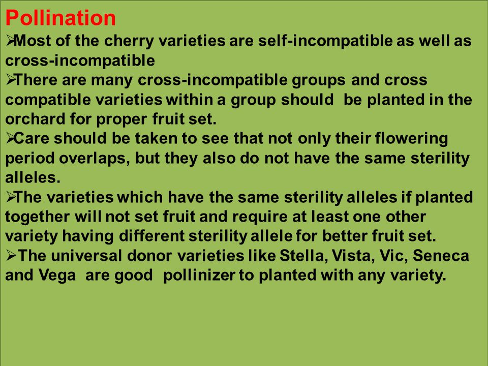 Pollination Most of the cherry varieties are self-incompatible as well as cross-incompatible.