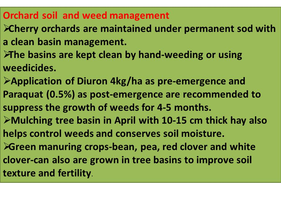 Orchard soil and weed management