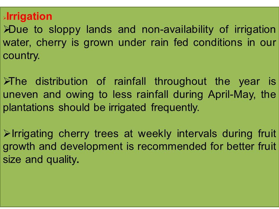 Irrigation Due to sloppy lands and non-availability of irrigation water, cherry is grown under rain fed conditions in our country.
